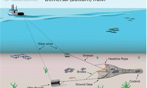 Just 1% think bottom trawling should continue