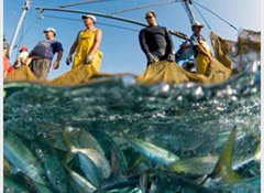 67% say the government should work on fisheries reform